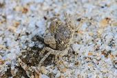 picture of hermit crab  - close up crab on a background of sand - JPG