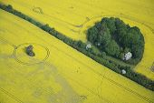 picture of rape-field  - Aerial photo of rape fields in Brandenburg county Germany middle of May - JPG