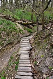 picture of ravines  - wooden bridge in the forest ravine with fallen tree - JPG