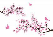 Постер, плакат: Сакура ветви с птицами