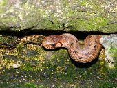 stock photo of winnebago  - A Brown Snake  - JPG