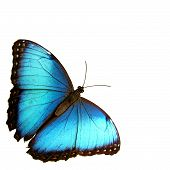 image of blue butterfly  - isolated blue butterfly...  - JPG