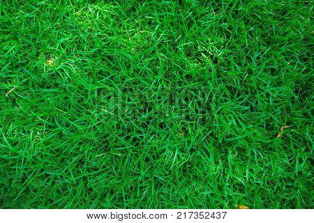 poster of Green fresh grass in botany garden background
