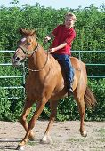 stock photo of bareback  - a young girl rides her horse bareback at a trot - JPG