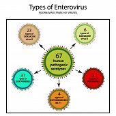 Types Of Enterovirus. Coxsackie Virus A And B, Poliomyelitis, Echovirus, Viruses Of The Family Of Pi poster