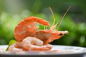Fresh Shrimps Served On Plate / Boiled Peeled Shrimp Prawns Cooked With Green Background In The Seaf poster