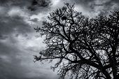 Silhouette Dead Tree And Branch On Dark Sky And Clouds. Background For Death, Hopeless, Despair,sad, poster