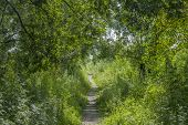 Summer Green Forest Path Landscape. Forest Path In Summer. Summer Forrest Path View. Summer Sunny Fo poster