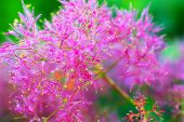 Amazing Pink Fluffy Grass In The Sun. poster