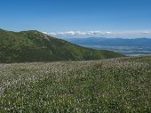 View On Valley Of Liptov Valley From Hiking Trail On Meadow With Blooming Pink Plantago Flowers, Wes poster