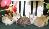 Four Furry Bunnies Huddle In Front Of Flower And A Picket Fence poster