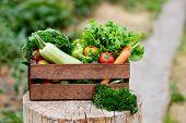 Basket Full Of Harvest Organic Vegetables And Root On Organic Bio Farm. Autumn Vegetable Harvest poster
