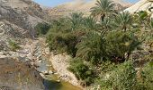 stock photo of jericho  - Wadi Qelt or Nahal Prat creek in Judean Desert near Jericho in spring - JPG