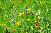 stock photo of wildflowers  - beautiful floral background with bright field plants - JPG
