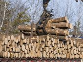 stock photo of skidder  - A logging truck being loaded with freshly cut pine logs - JPG