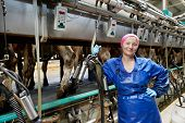 stock photo of milkmaid  - Positive dairymaid at automatic milking system industry cow farm - JPG