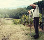 Farmer In The Vineyard