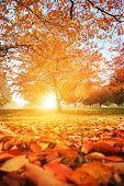 stock photo of fallen  - Beautiful autumn park with red and yellow leaves fallen from tree - JPG
