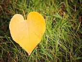 picture of fallen  -  an image of single fallen leaf on ground in a ray of sunshine on the earth  - JPG