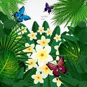 picture of plumeria flower  - Floral design background - JPG