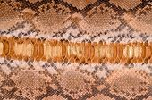stock photo of pythons  - Close up a natural brown python leather - JPG