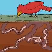 picture of cardinal-bird  - Happy red bird pecking ground with tunnelling earthworms - JPG