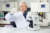 stock photo of microscope slide  - Senior male scientist analyzing microscope slide in medical lab - JPG