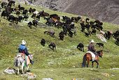 stock photo of pinner  - stockriders with flock in Alay mountains on pastureland  - JPG