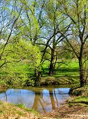 stock photo of pasture  - Wade across small river on the pasture - JPG