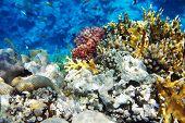 foto of damselfish  - Underwater fish from Red Sea. Beatu word ** Note: Visible grain at 100%, best at smaller sizes - JPG