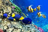 stock photo of butterfly fish  - Coral and fish in the Red Sea. Egypt Africa ** Note: Soft Focus at 100%, best at smaller sizes - JPG