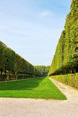 picture of royal botanic gardens  - Green archway in a garden - JPG