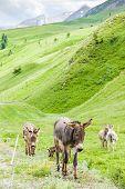 image of donkey  - donkeys - JPG