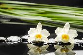 picture of fukushima  - Lying down branch gardenia with therapy stones  - JPG