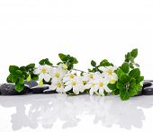 pic of stone-therapy  - Set of branch gardenia with therapy stones  - JPG