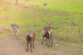 picture of deer horn  - Herd of deer in the wild - JPG
