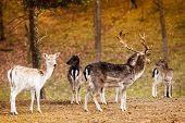 stock photo of deer horn  - Herd of deer in the wild - JPG