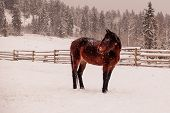stock photo of wrangler  - a lonely horse in the snow waiting for the wrangler - JPG