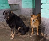 foto of stray dog  - Two stray dogs hide from the rain - JPG