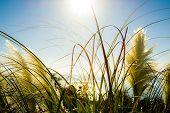 image of vegetation  - Close up of vegetation in the sun - JPG