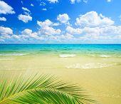 Постер, плакат: песок и океан