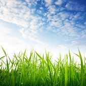 pic of grass  - grass and cloudy sky - JPG