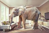 Big elephant and the case of beer  in the living room. Photo combination&cg elements included poster