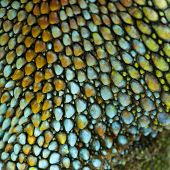 colorful reptile skin