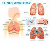 Lungs Anatomy Medical Vector Illustration Diagram Set With Lung Lobes, Bronchi And Alveoli. poster