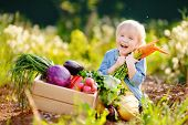 Cute Little Boy Holding A Bunch Of Fresh Organic Carrots In Domestic Garden. Healthy Family Lifestyl poster