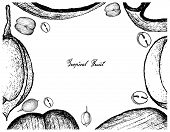 Tropical Fruits, Illustration Frame Of Hand Drawn Sketch Coco De Mer Or Double Coconut And Mamoncill poster