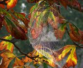 picture of spider web  - spider web - JPG