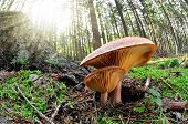 fish eye view of mushroom in forest