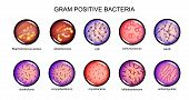 Vector Illustration Of Gram-positive Bacteria. Microbiology. Bacteriology poster